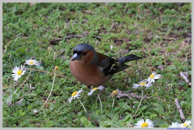 [Ouvert] FIL - Oiseaux. - Page 32 Dsc03470