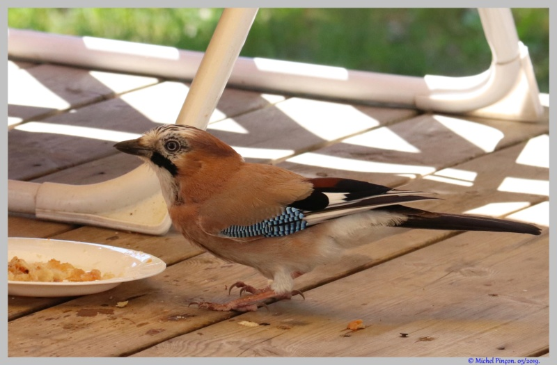 [Ouvert] FIL - Oiseaux. - Page 32 Dsc03473