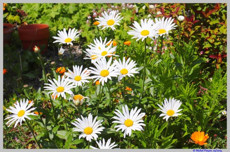 [Fil ouvert] Fleurs et plantes - Page 17 Dsc03535