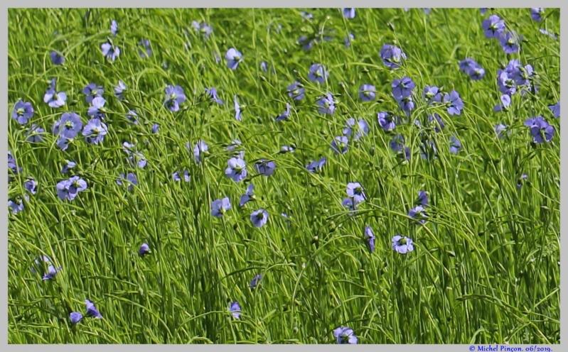 [Fil ouvert] Fleurs et plantes - Page 17 Dsc03556