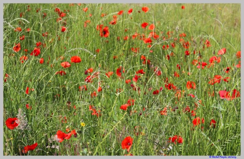 [Fil ouvert] Fleurs et plantes - Page 17 Dsc03558