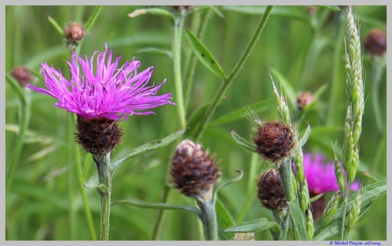 [Fil ouvert] Fleurs et plantes - Page 17 Dsc03559