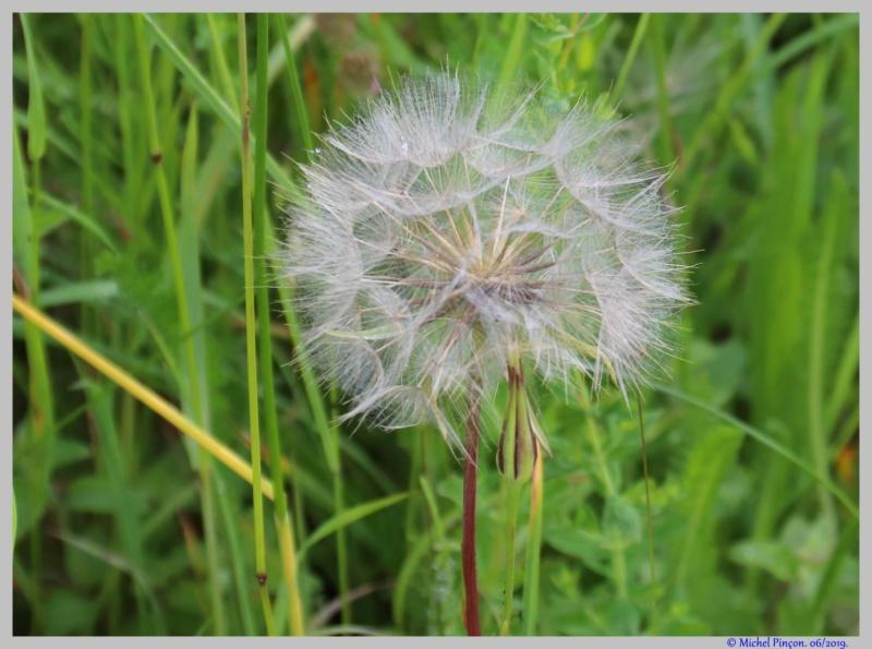 [Fil ouvert] Fleurs et plantes - Page 17 Dsc03560