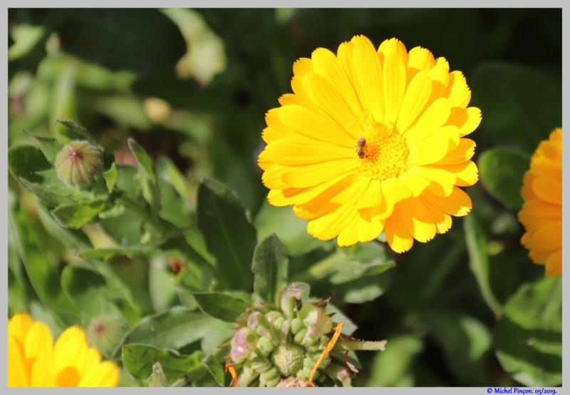 [Fil ouvert] Fleurs et plantes - Page 17 Dsc03561