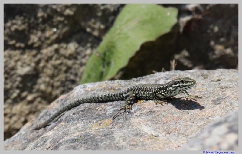 [Fil ouvert à tous] Reptiles, serpents, tortues, amphibiens, ... - Page 10 Dsc03572