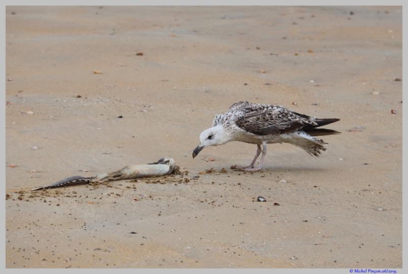 [Ouvert] FIL - Oiseaux. - Page 32 Dsc03576