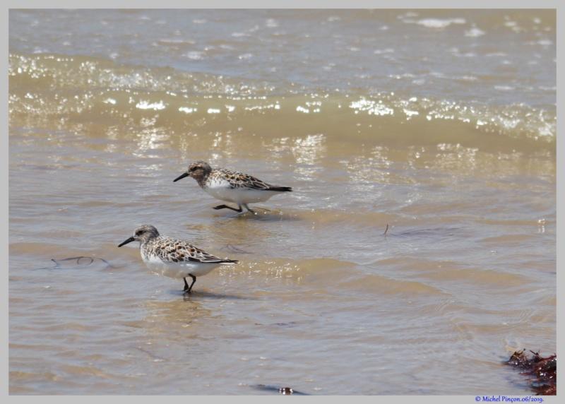[Ouvert] FIL - Oiseaux. - Page 33 Dsc03651