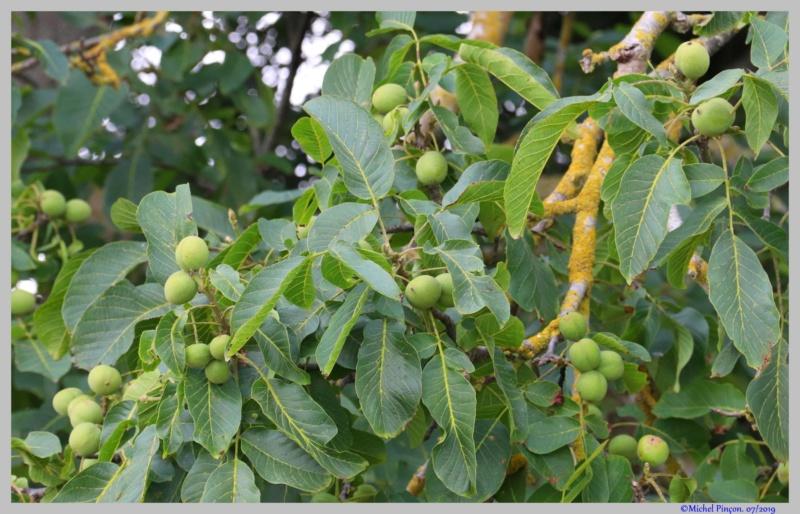 [Fil ouvert] Fruit sur l'arbre - Page 12 Dsc03779