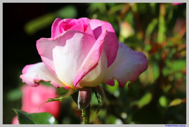 [Fil ouvert] Fleurs et plantes - Page 19 Dsc03801