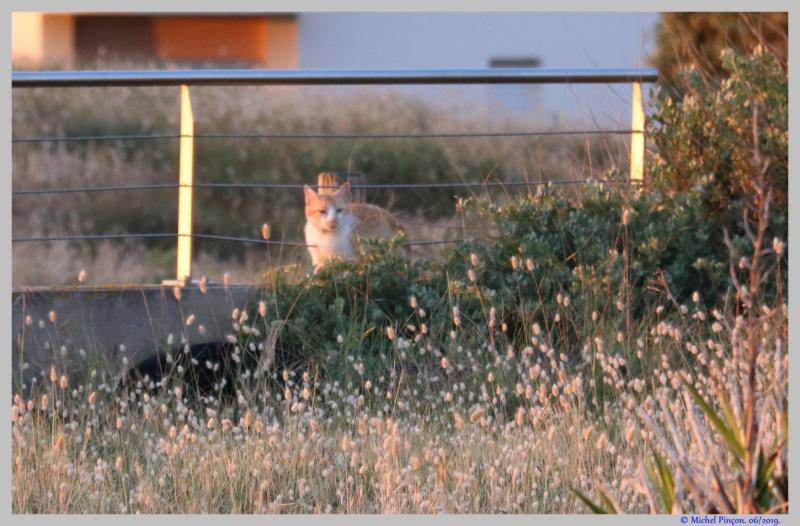 [fil ouvert] Les chats  - Page 10 Dsc03804