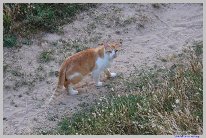 [fil ouvert] Les chats  - Page 10 Dsc03805