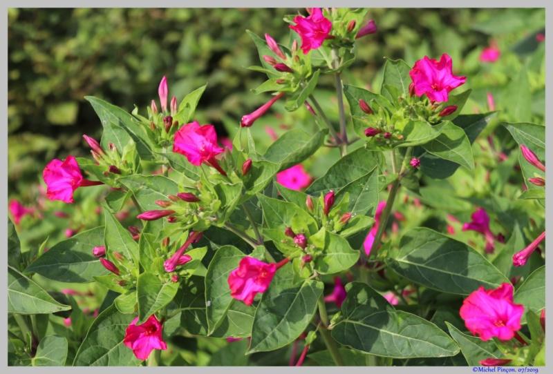 [Fil ouvert] Fleurs et plantes - Page 19 Dsc03808