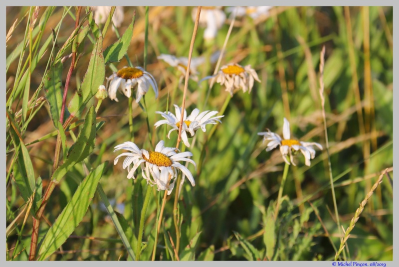 [Fil ouvert] Fleurs et plantes - Page 19 Dsc03926