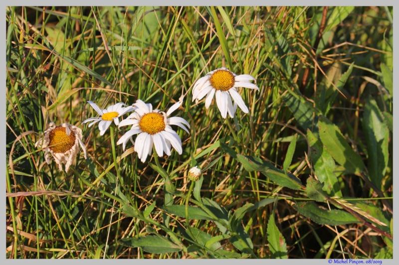 [Fil ouvert] Fleurs et plantes - Page 19 Dsc03927