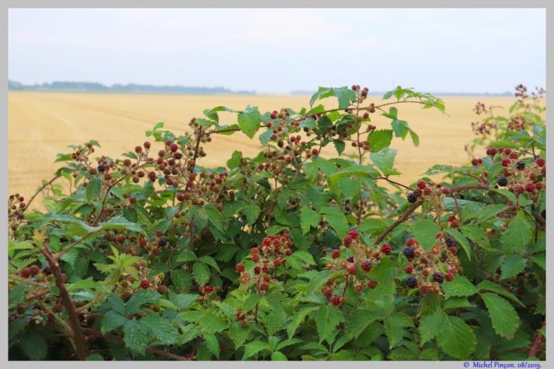 [Fil ouvert] Fruit sur l'arbre - Page 12 Dsc03943