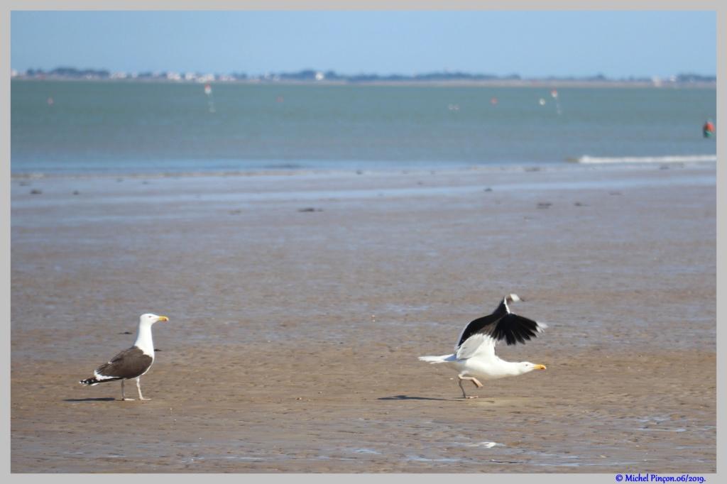 [Ouvert] FIL - Oiseaux. - Page 33 Dsc04159