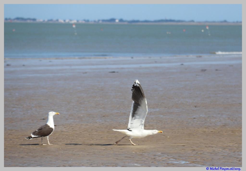 [Ouvert] FIL - Oiseaux. - Page 33 Dsc04160
