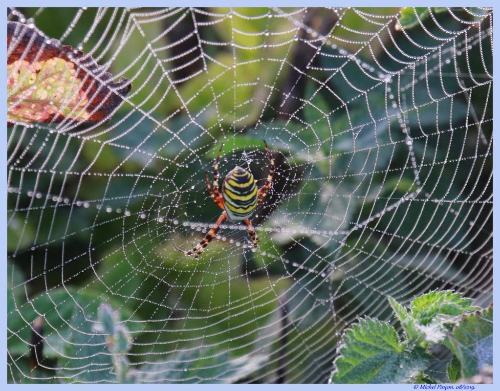 (FIL OUVERT à tous) vous aimez les araignées? - Page 7 Dsc04264