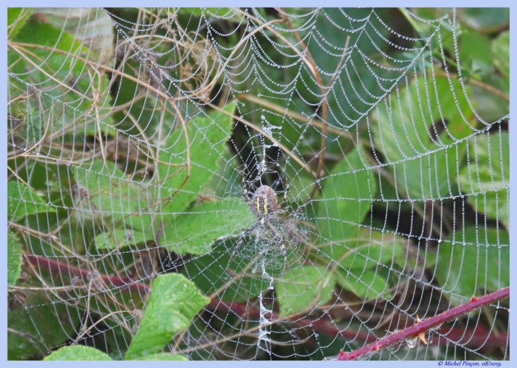 (FIL OUVERT à tous) vous aimez les araignées? - Page 7 Dsc04265
