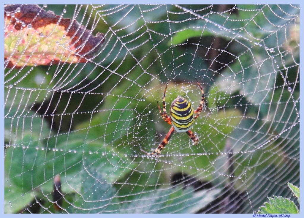 (FIL OUVERT à tous) vous aimez les araignées? - Page 7 Dsc04266