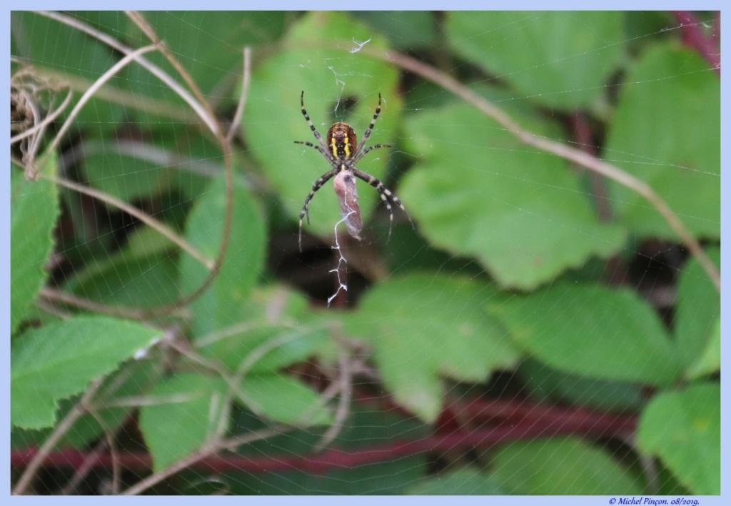 (FIL OUVERT à tous) vous aimez les araignées? - Page 7 Dsc04294