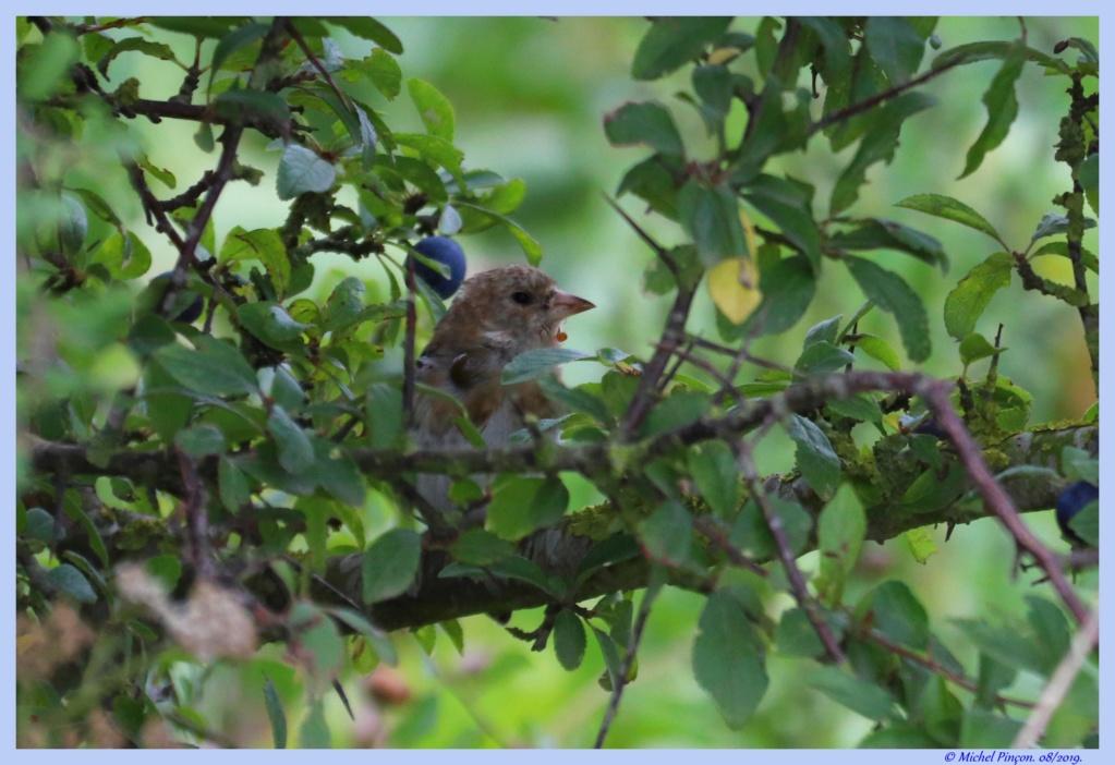[Ouvert] FIL - Oiseaux. - Page 33 Dsc04304