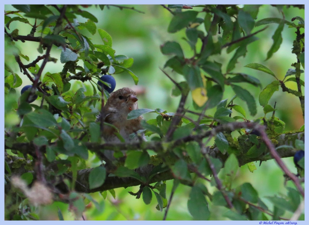 [Ouvert] FIL - Oiseaux. - Page 33 Dsc04305