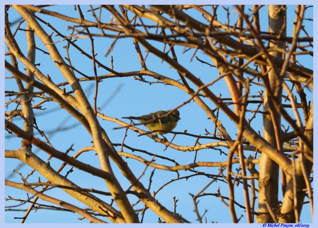 [Ouvert] FIL - Oiseaux. - Page 33 Dsc04317