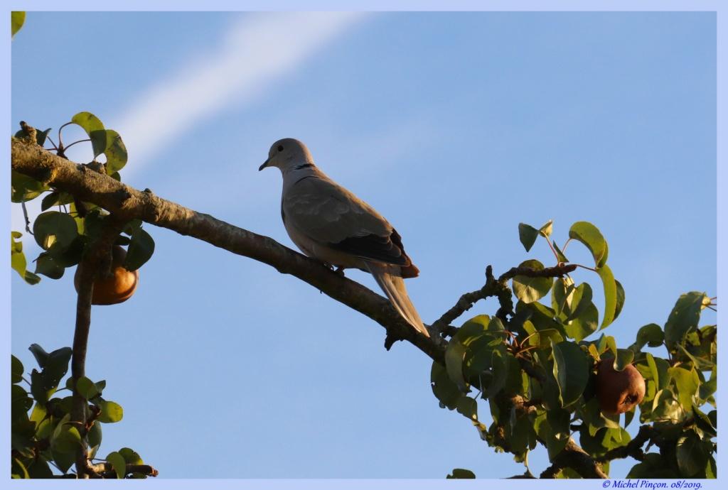 [Ouvert] FIL - Oiseaux. - Page 33 Dsc04318
