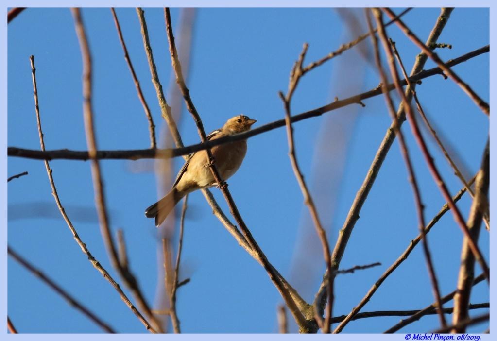 [Ouvert] FIL - Oiseaux. - Page 33 Dsc04319
