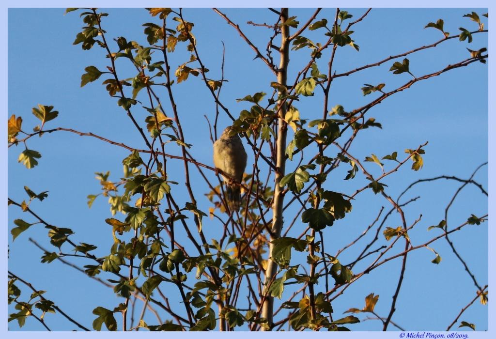 [Ouvert] FIL - Oiseaux. - Page 33 Dsc04320