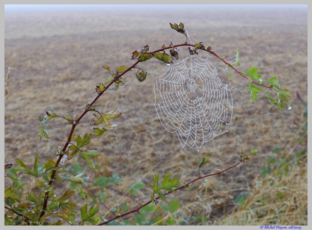 [Fil ouvert] Toile d'araignée Dsc04397