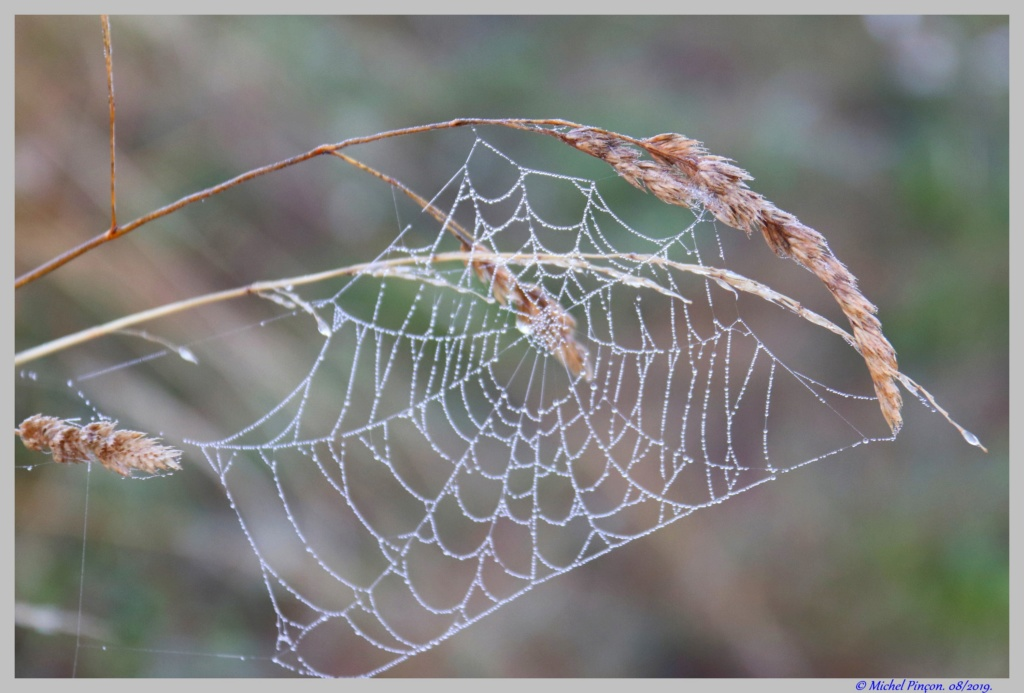 [Fil ouvert] Toile d'araignée Dsc04398