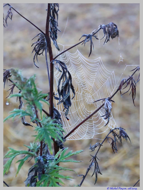 [Fil ouvert] Toile d'araignée Dsc04399