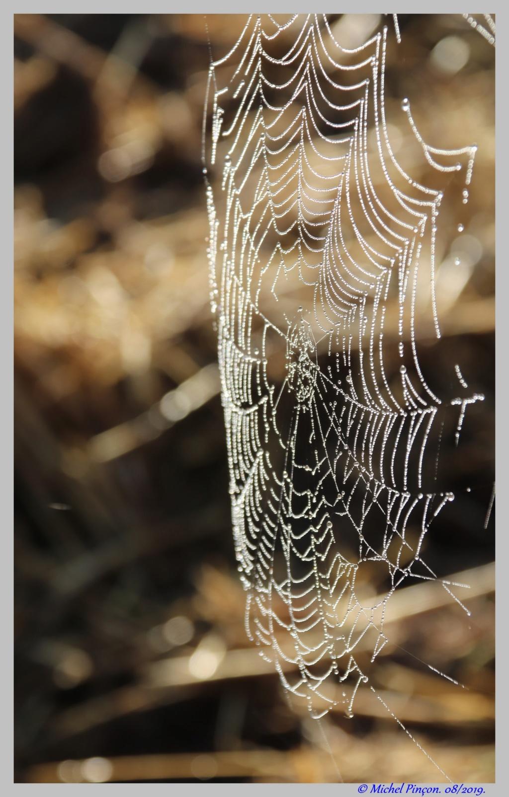 [Fil ouvert] Toile d'araignée Dsc04400