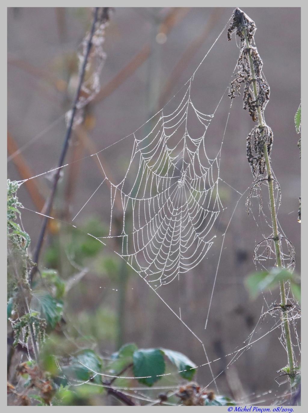 [Fil ouvert] Toile d'araignée Dsc04401