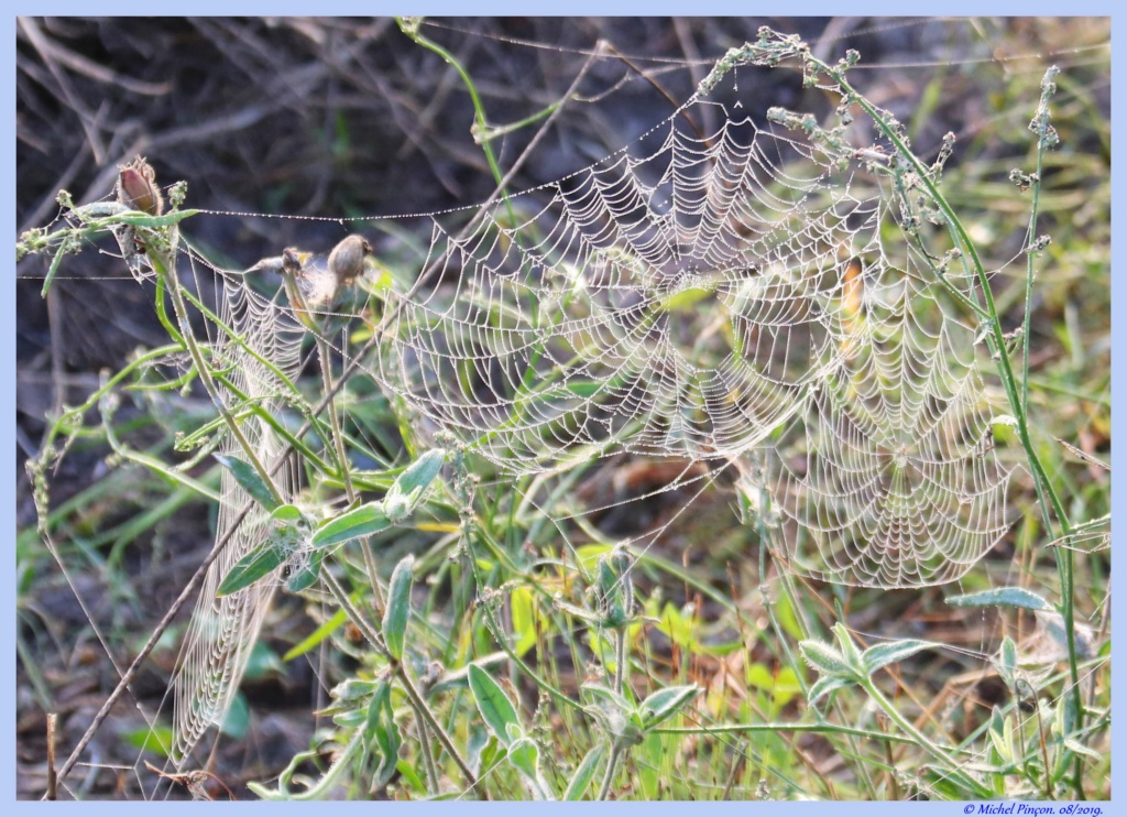 [Fil ouvert] Toile d'araignée Dsc04403