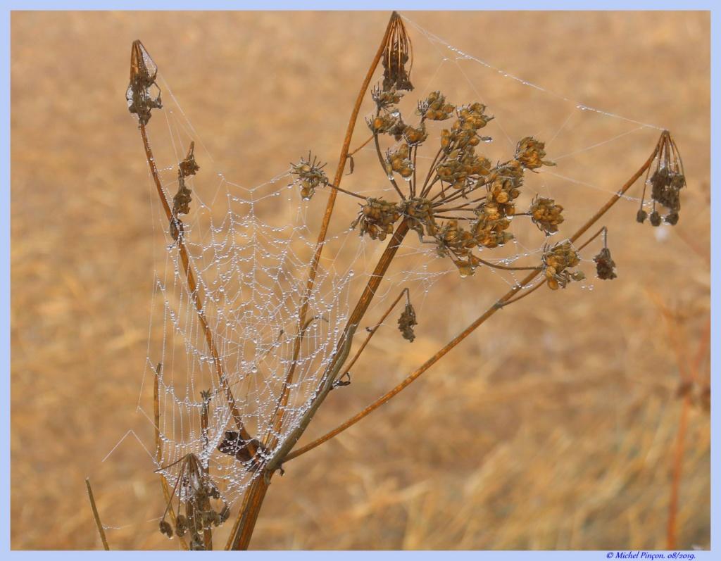 [Fil ouvert] Toile d'araignée - Page 2 Dsc04404