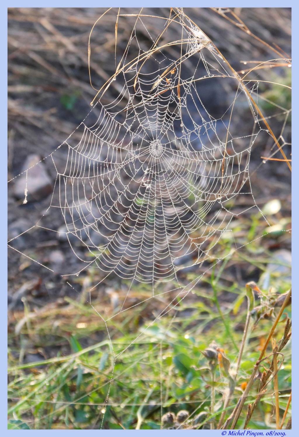 [Fil ouvert] Toile d'araignée - Page 2 Dsc04405