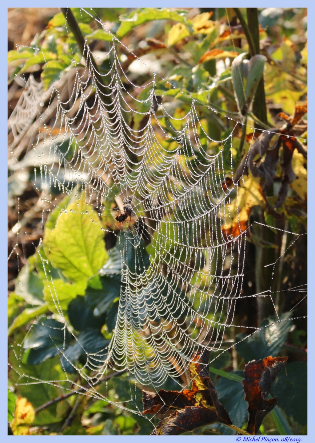 [Fil ouvert] Toile d'araignée - Page 2 Dsc04406