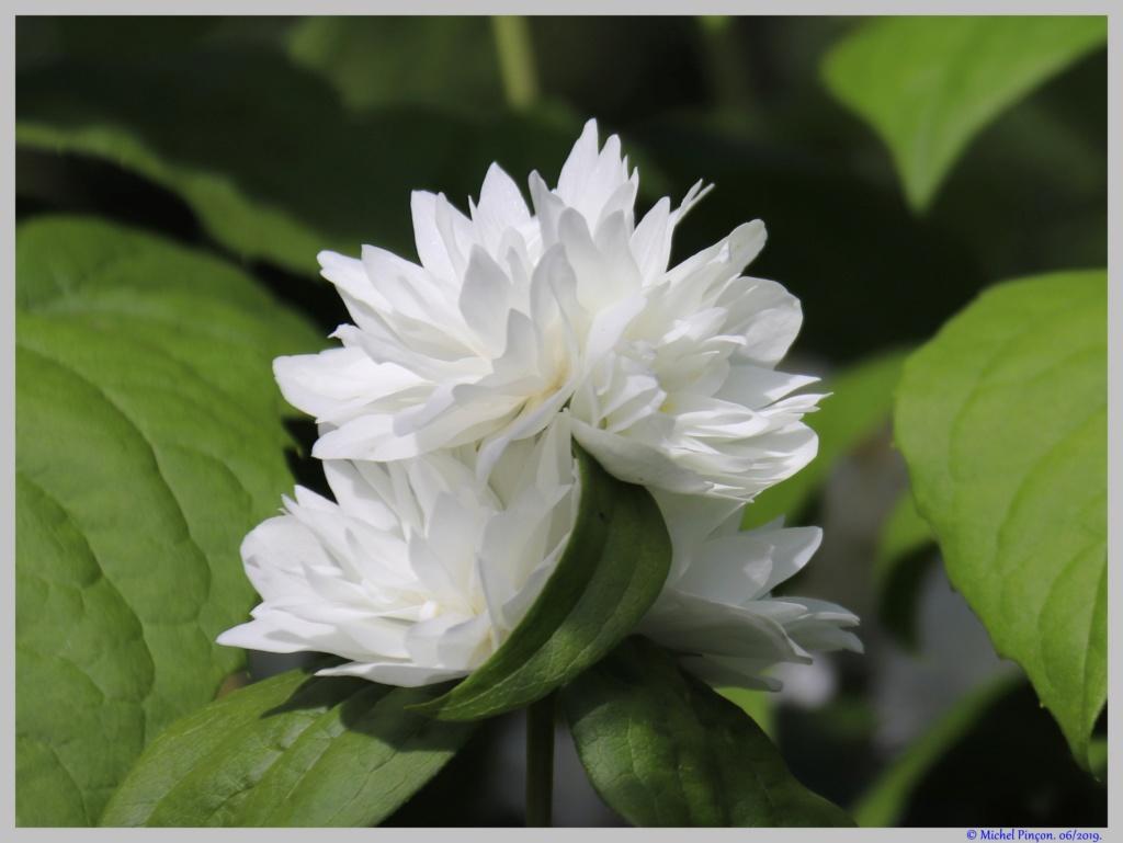 Thème du mois d'octobre 2019 :   Fleurs et jardins  Dsc04887