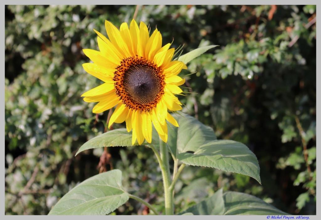 Thème du mois d'octobre 2019 :   Fleurs et jardins  Dsc04888