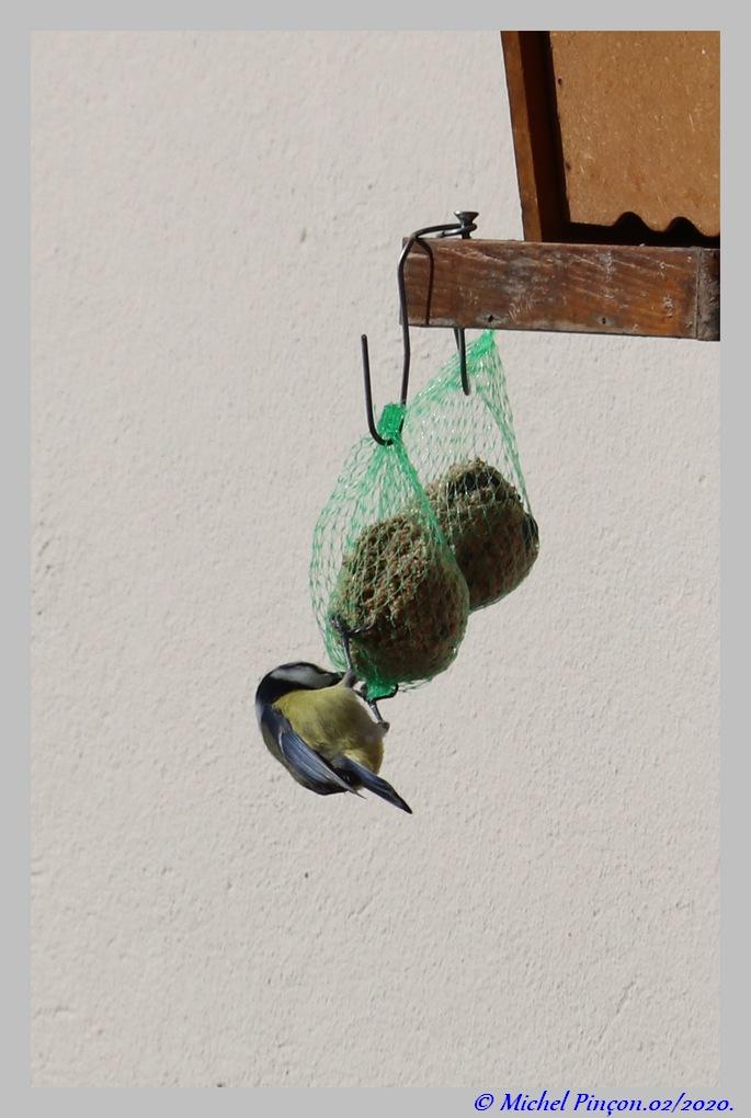 [Ouvert] FIL - Oiseaux. Dsc06373