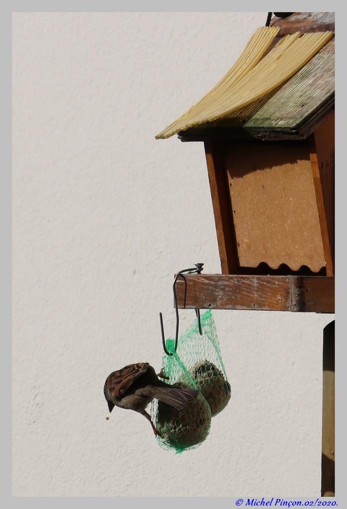 [Ouvert] FIL - Oiseaux. Dsc06374
