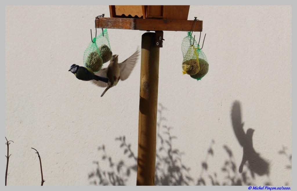 [Ouvert] FIL - Oiseaux. Dsc06375