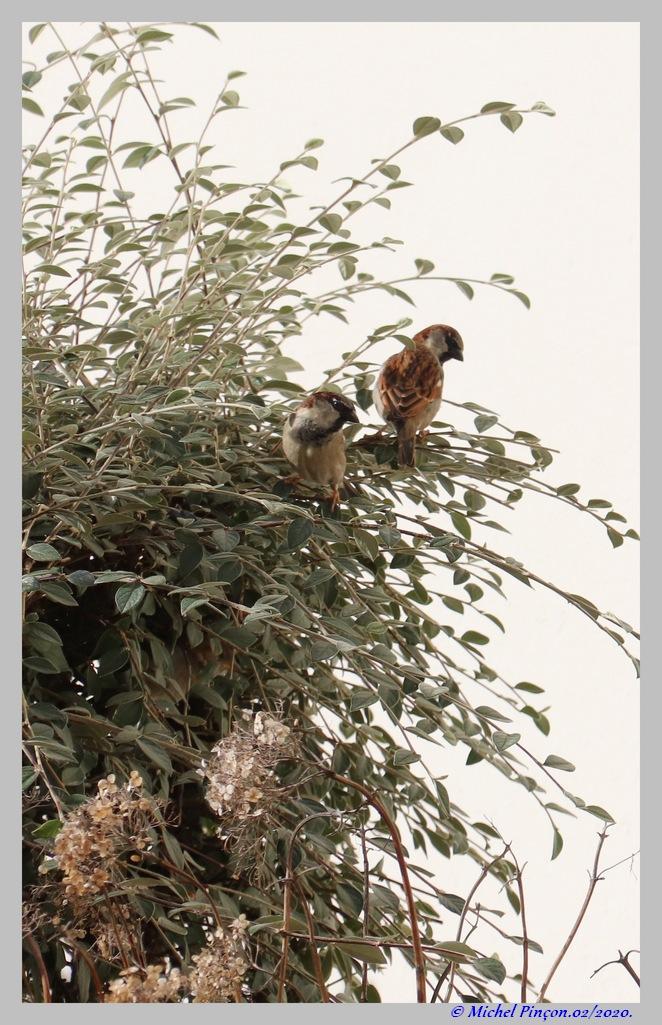 [Ouvert] FIL - Oiseaux. Dsc06376