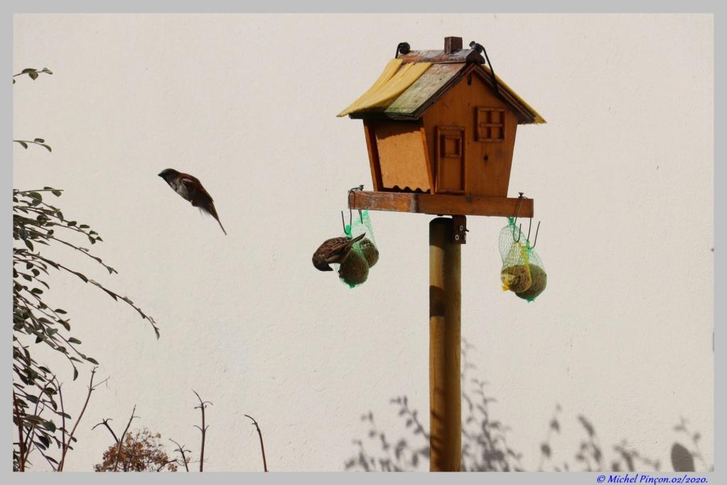 [Ouvert] FIL - Oiseaux. Dsc06377