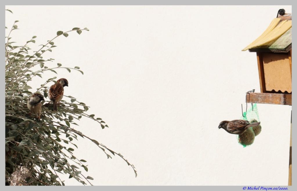 [Ouvert] FIL - Oiseaux. Dsc06378