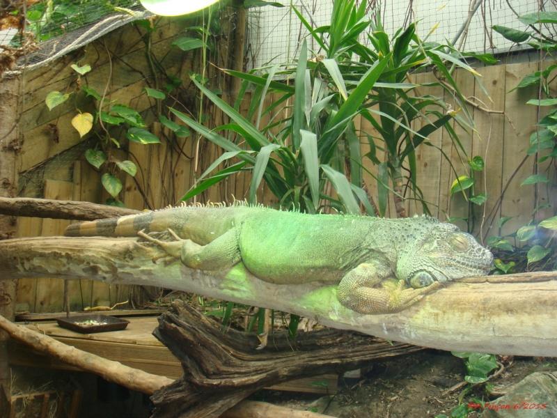 [Fil ouvert à tous] Reptiles, serpents, tortues, amphibiens, ... - Page 5 Dsc07810