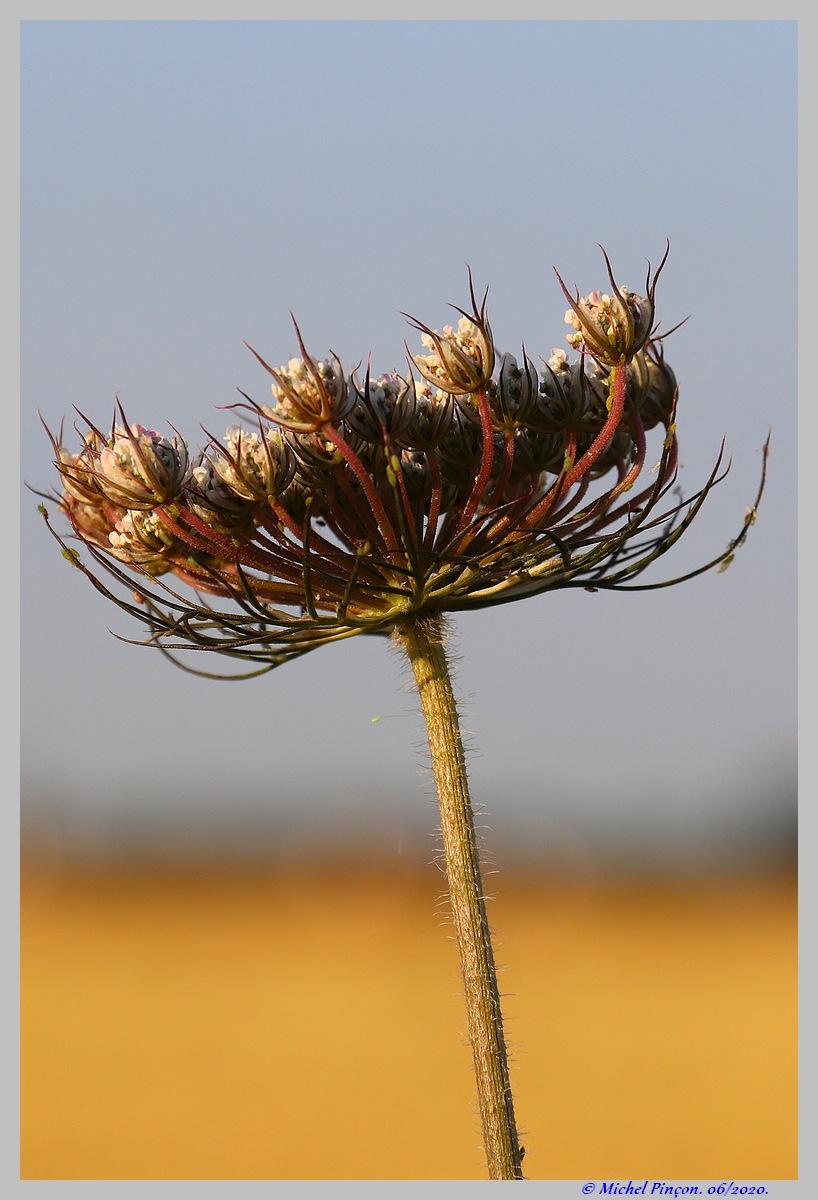 [Fil ouvert] Fleurs et plantes - Page 32 Dsc08234